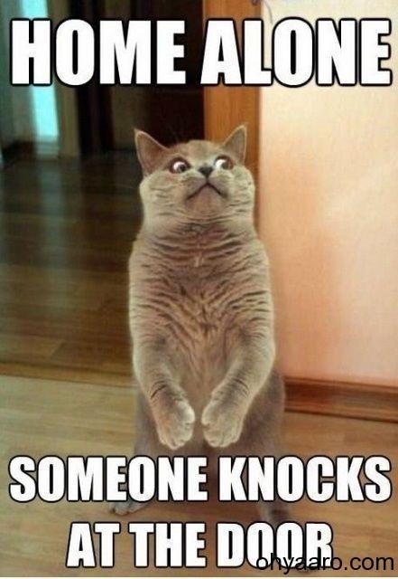 funny cat picturesc
