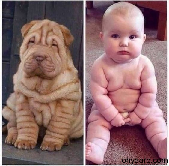 Latest Funny Baby Picture