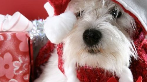 Funny Christmas Dog Pictures