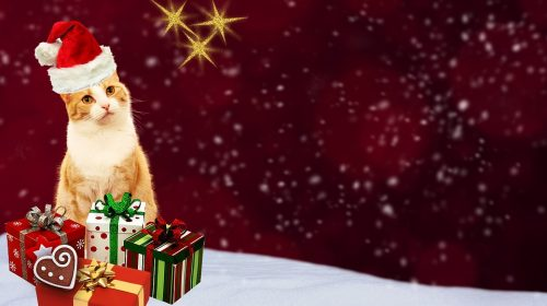 Christmas Cat Pictures