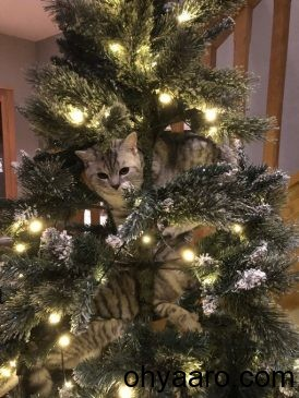 Christmas trees for cat