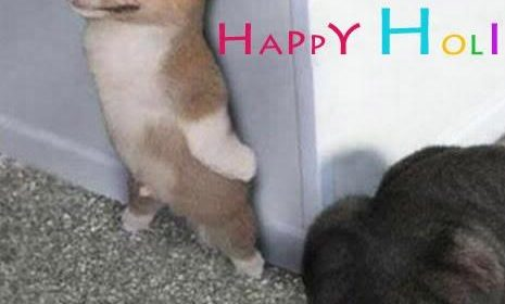 Happy Holi Jokes Download